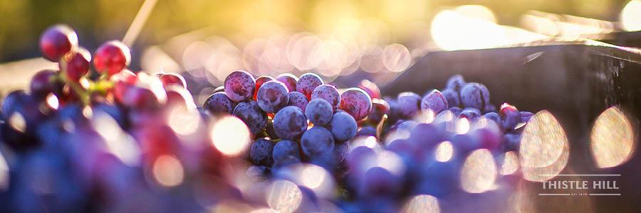 Organic Wine Mudgee